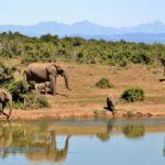 7 van de 'hotste' bestemmingen voor een eco-vriendelijke vakantie
